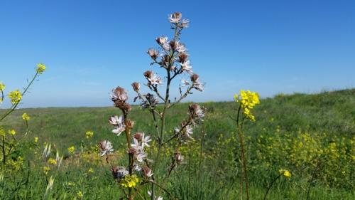 Bitronot Flowers_2