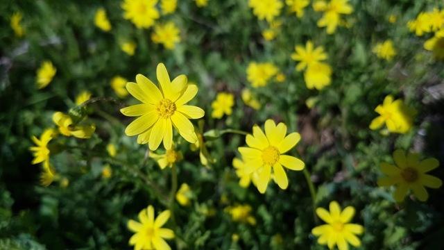 סביון אביבי | צילום: סמדר זורע־ברמק
